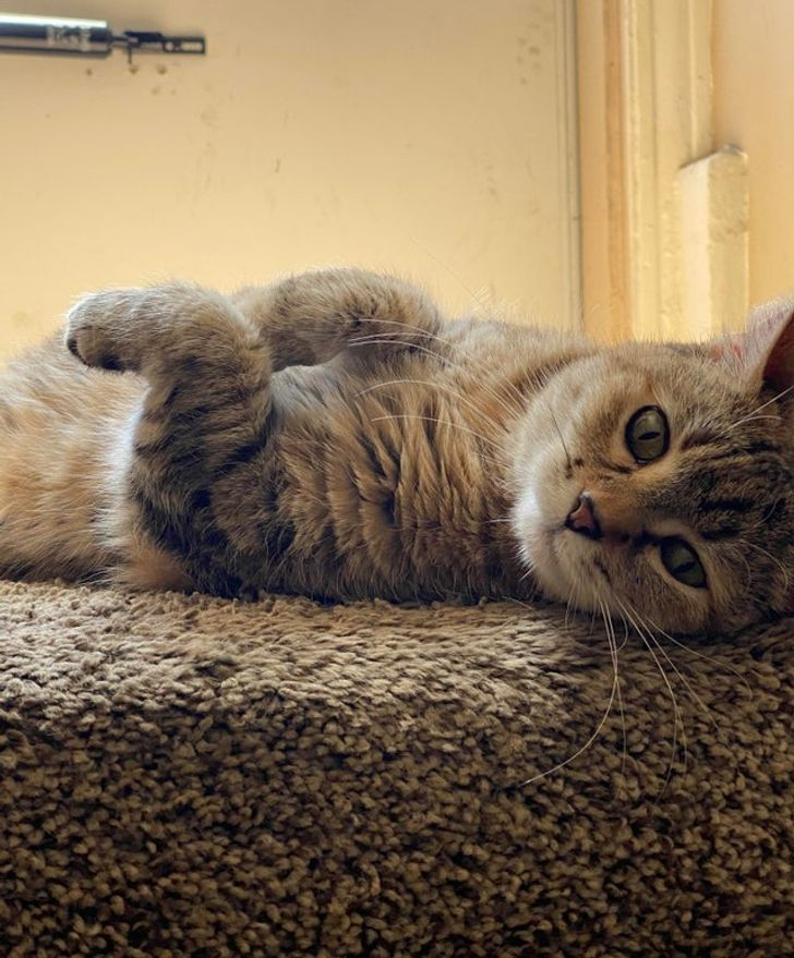 25 Cats Showing a Sweet Side That Their Owners Get to See Every Day