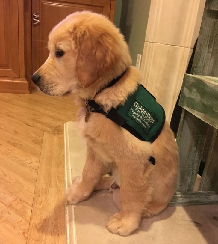 20+ Good Boys Who Know How to Do Their Jobs Just Pawfectly