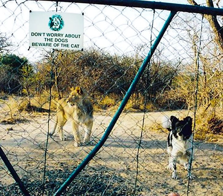 """15+Funny """"Beware ofthe Dog"""" Signs and the Very Dangerous Dogs Behind Them"""