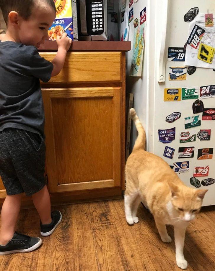23 bằng chứng cho thấy mèo là cái loài thích ăn Pate của sen nhưng mà lại mê máy lạnh nhà hàng xóm 16