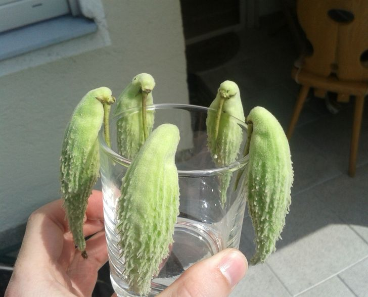 23 Startling Fruits and Vegetables That Seem to Have Come Alive