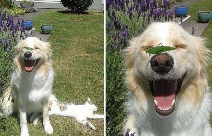 26 Sincere Shots Proving That Dogs Are Made of Love