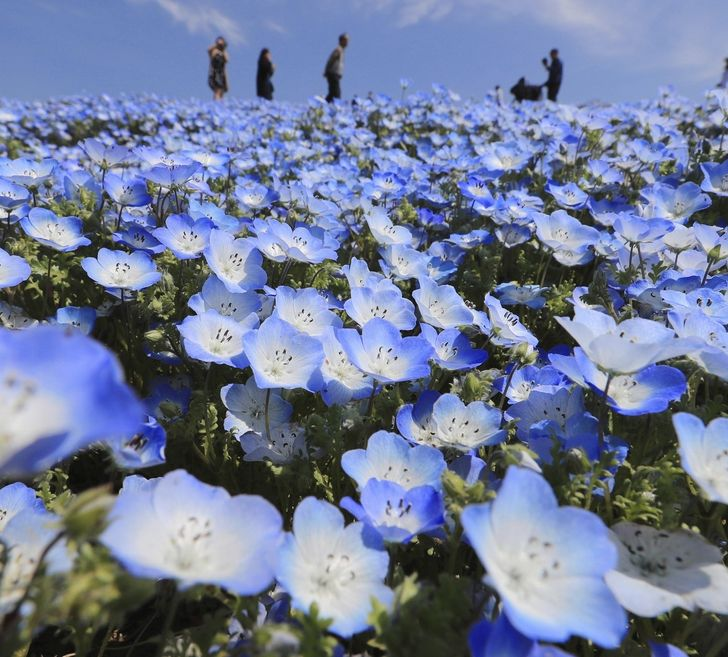 4.5 Million Flowers Start Blooming All at Once and Turn a Japanese Park Into a Fairytale Garden (20 Pics)