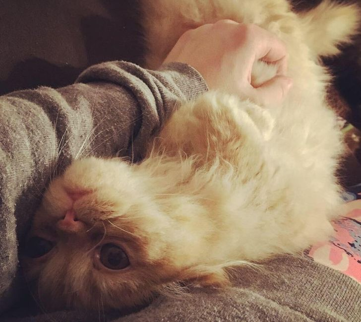 Not All Cats Are Jerks: 15 Friendly Cat Breeds That Will Actually Give a Fluff About You