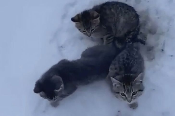 A Man Saves 3 Kitties Who Were Frozen to the Ground with Nothing but a Cup of Coffee