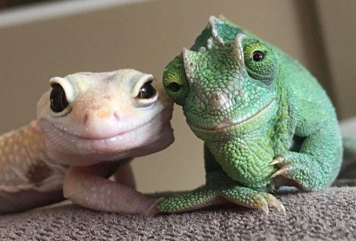 18 zdjęć, które udowadniają, że zwierzęta są wiecznym źródłem szczęścia