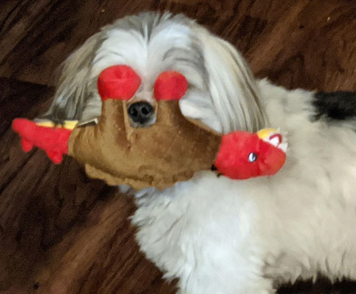 19 Pets Who Made Their Owners Burst With Laughter