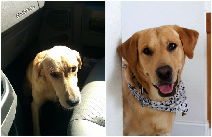 15Animals Before and After They Were Taken from aShelter