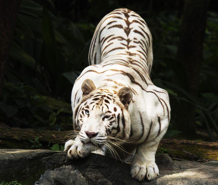 20+Beautiful Animals WeCan't Stop Staring At