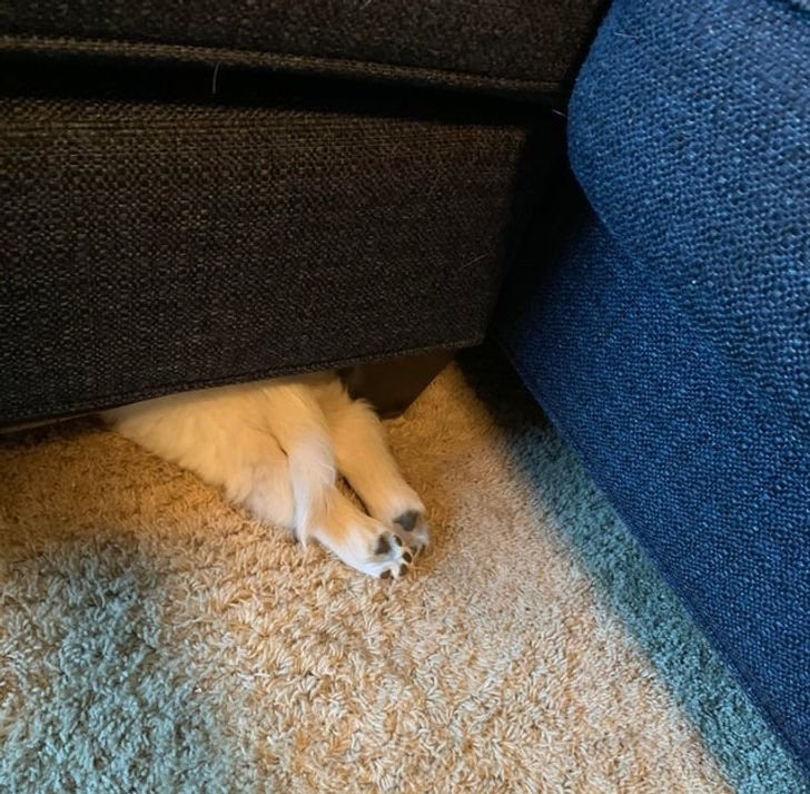 """20 Creatures That Would Totally Win the """"Hide and Seek"""" Trophy"""
