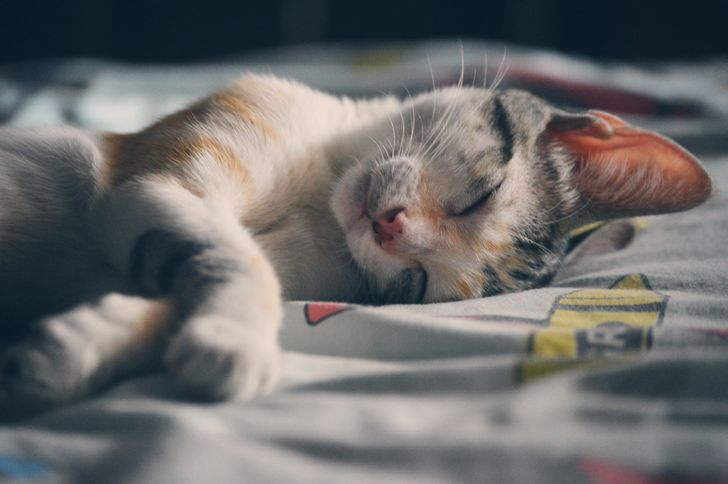 12 Interesting Facts About Dreams That Few People Know