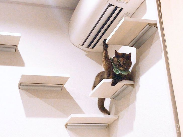 """20 Cats Who Accidentally Broke Their """"Default"""" Settings"""