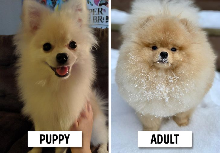 15 Dog Breeds That Look Like Puppies
