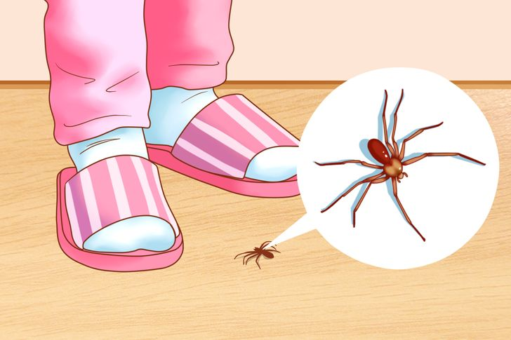 7Ways toGet Rid ofInsects inYour House That Actually Work