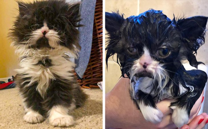 15 Animals That Showed Their True Nature After Taking a Bath