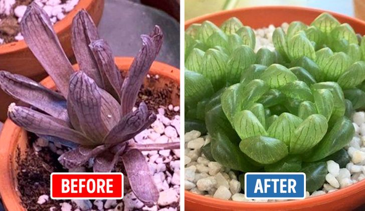 "15+ Ways to Save a ""Dead"" Plant, Even If You Don't Have a Green Thumb"