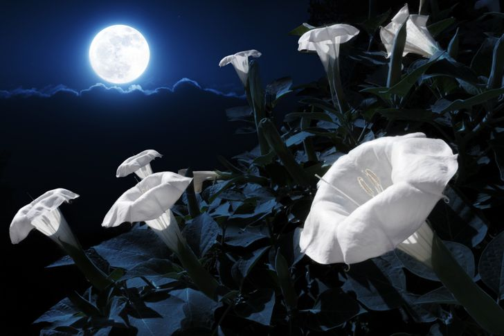 You Can Turn Your Garden Into a Fairytale With 20 Flowers That Bloom at Night