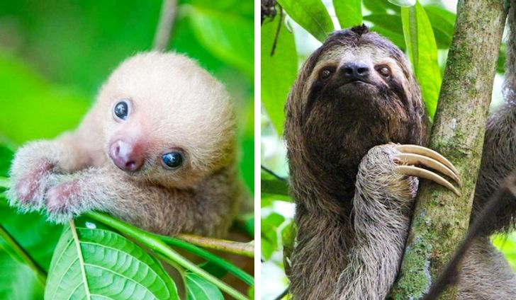 22Cubs Who Don't Look Like Their Parents atAll