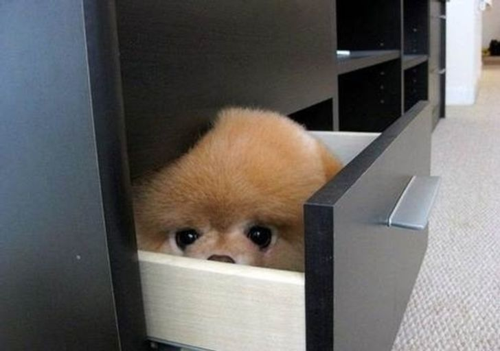 20 dogs who think they've found the perfect hiding place