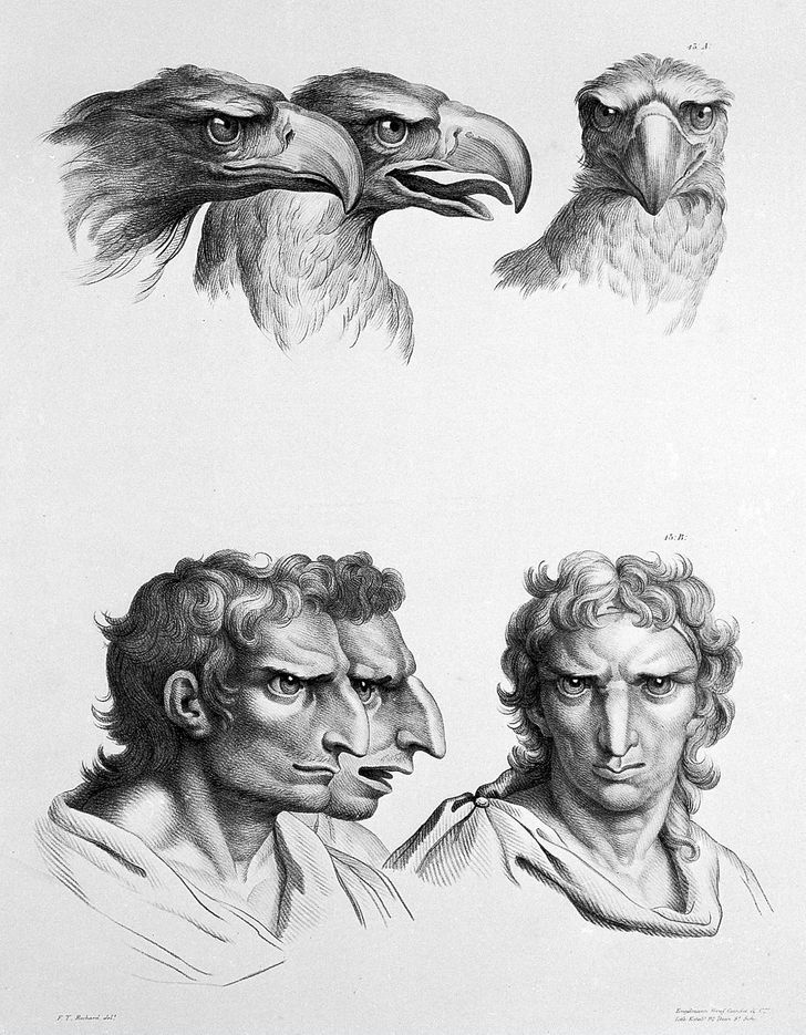 What would humans look like ifthey evolved from different animals?