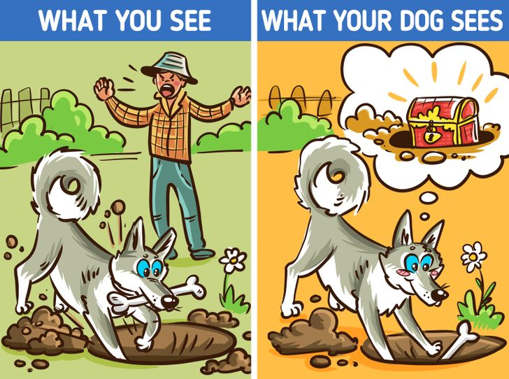 12 Seemingly Weird Things Your Dog Does That Actually Have a Good Explanation