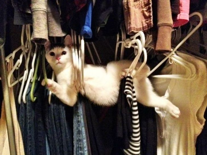 27Naughty Pets Who Didn't Expect You'd BeHome SoSoon