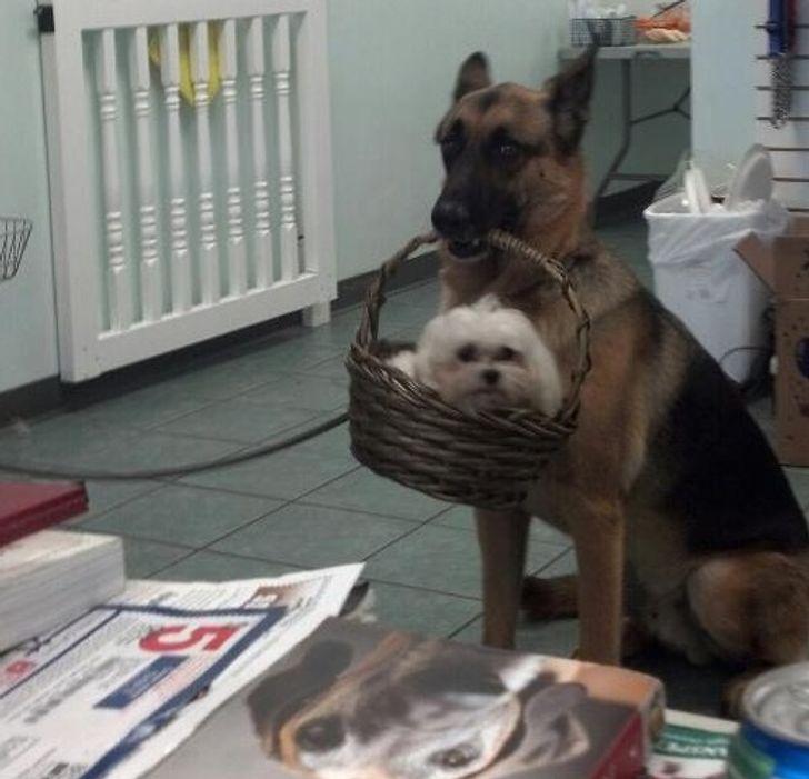20 fotografií, ktoré dokazujú, že psy sú darom z neba