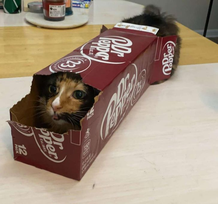 Prečo sú vaše mačky závislé na malých priestoroch a krabiciach