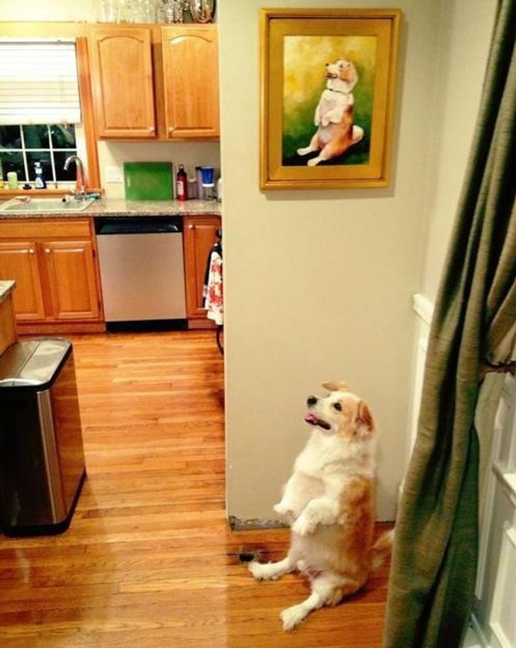25 Photos That'll Brighten Up Your Darkest Day