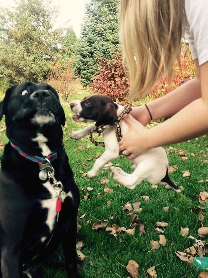 Adult Pets Meet Their New Furry Friends for the First Time, and Their Reactions Are Priceless