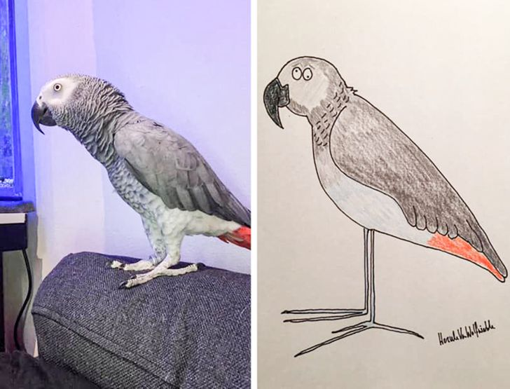 A Guy Goes Viral for His Poorly-Drawn Pet Portraits and Raises Thousands for Charity