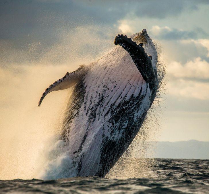 23 snímok, vďaka ktorým sa tento deň prírody zamilujete