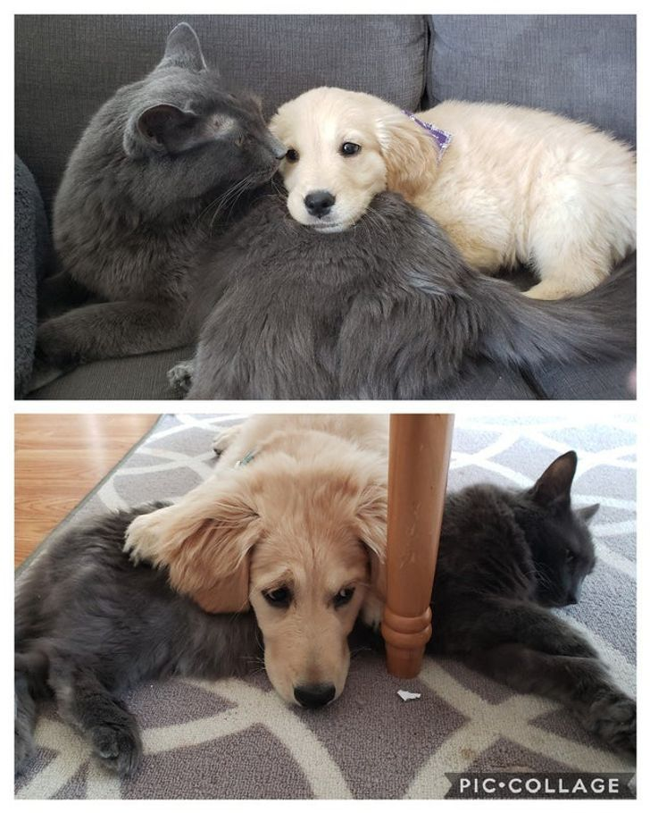 """20 Sweet Photos That Made Us Go,""""OMG, My Heart, Please"""""""