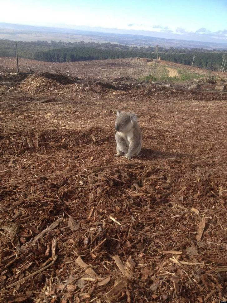 15+ Photos Showing How Devastated Mother Nature Feels When We Stab Her in the Back