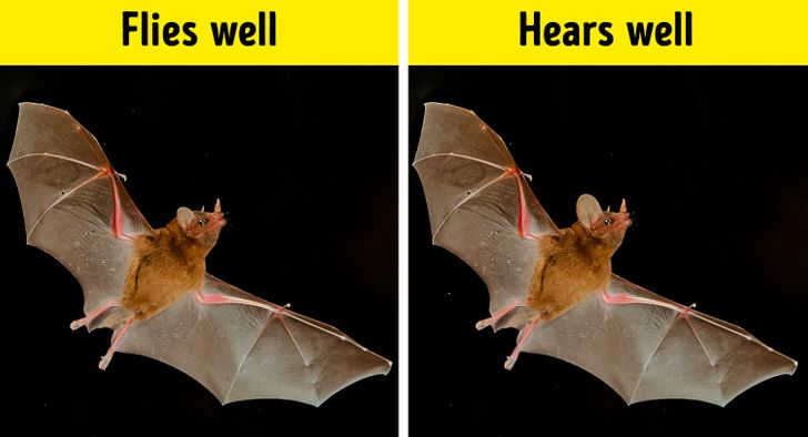 """26Astonishing Animal Facts That Made UsSay, """"Wow"""""""