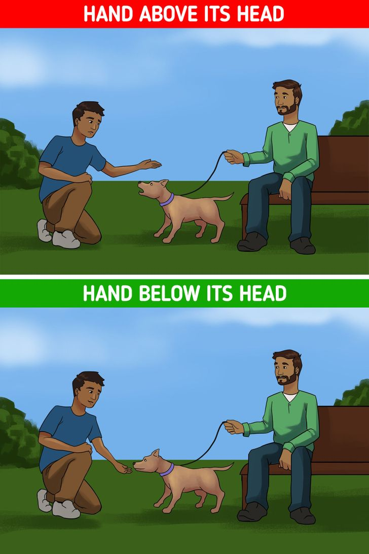 10 Tips on How to Approach Dogs You Don't Know in a Friendly Way