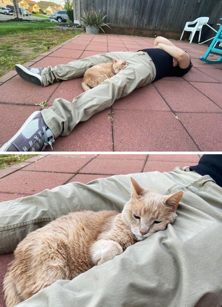 23 bằng chứng cho thấy mèo là cái loài thích ăn Pate của sen nhưng mà lại mê máy lạnh nhà hàng xóm 8
