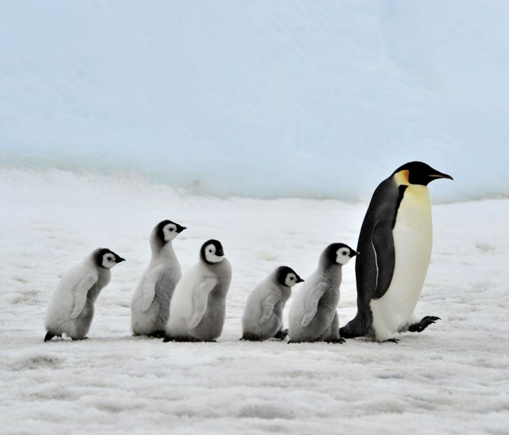 20 Fun Facts About Penguins We Didn't Learn in Biology Class