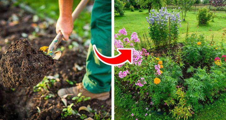 5 sztuczek z sodą oczyszczoną, których możesz użyć, aby zadbać o swój ogród