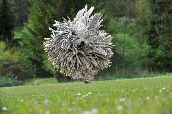 14 Animals With the Craziest Hairstyles That'll Make Your Day