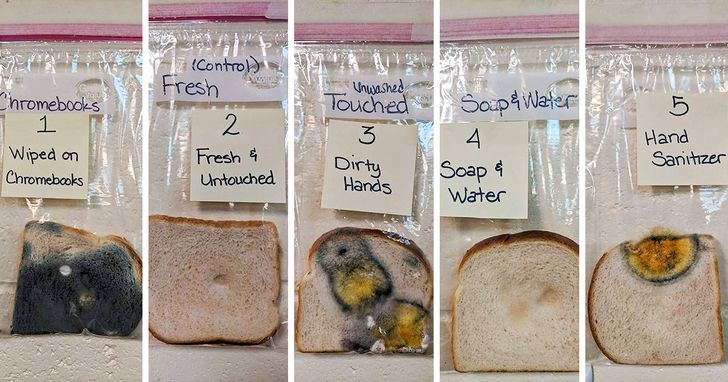 A Teacher Did an Experiment to Show the Power of Handwashing, and You Can't Stay Unimpressed
