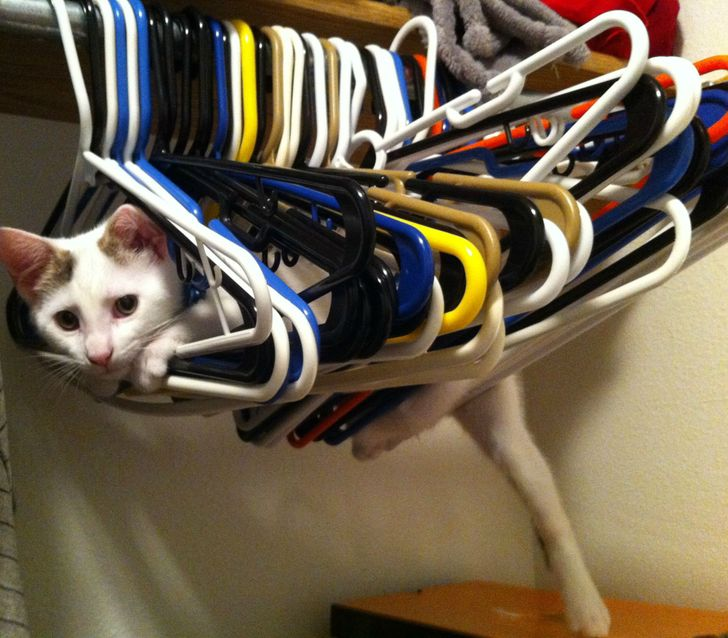 19 Pets Who Can Push Your Happy Button Right Away