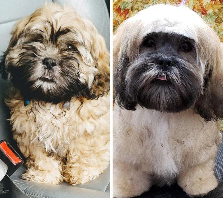 19 câini a căror vizită la groomer i-a transformat în animale de companie cu totul diferite