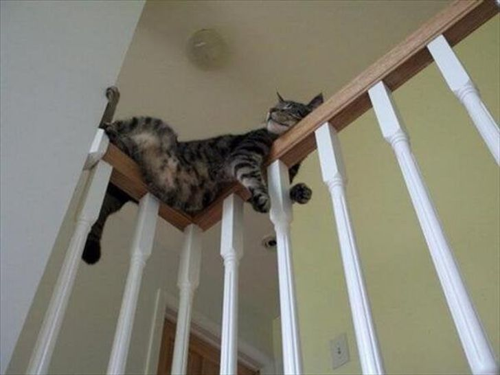 """15+ Animals That We Want to Ask """"What Are You Doing Here?"""""""