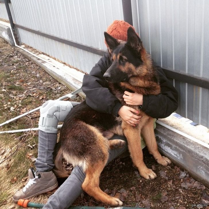 20+ Hilarious Reasons Why You May Want to Rethink Getting a German Shepherd
