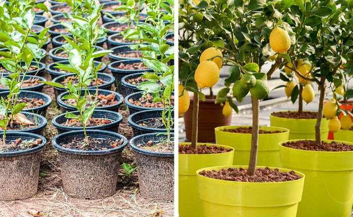 8Fruit Trees You Can Grow From the Seeds and Pits ofYour Own Fruit