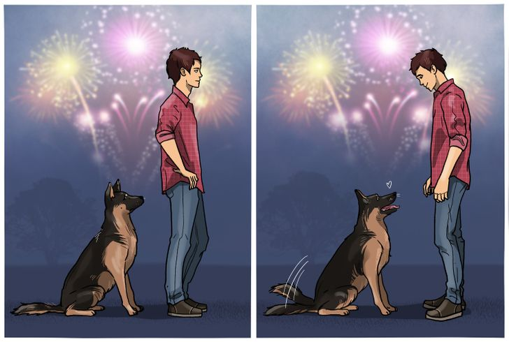 8 Ways to Calm Down an Anxious Pet, Especially During Fireworks or on a Trip to the Vet