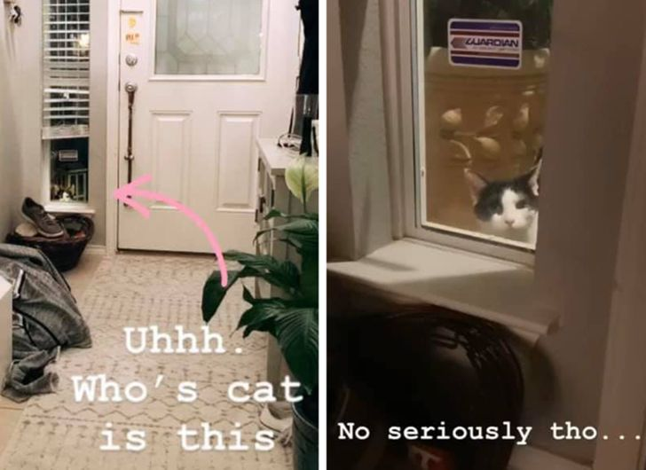 A Lost Cat Keeps Staring Into a Random Family's Windows, and the Story Gets Better and Better With Every Day