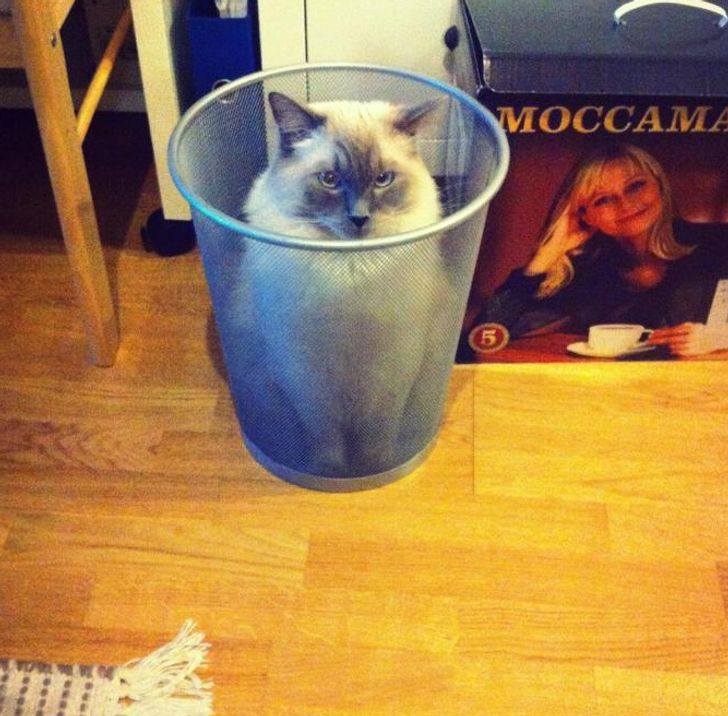20Photos Proving That Cat Logic IsHilarious