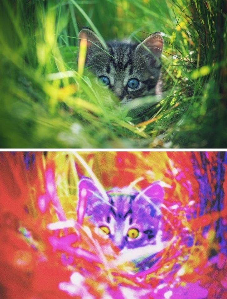Si duket bota përmes syve të kafshëve të ndryshme